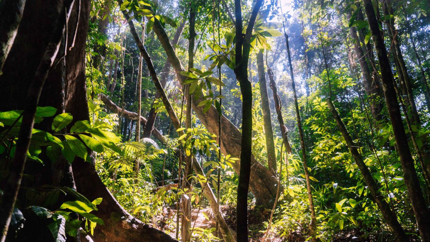 Rainforest in the sunshine